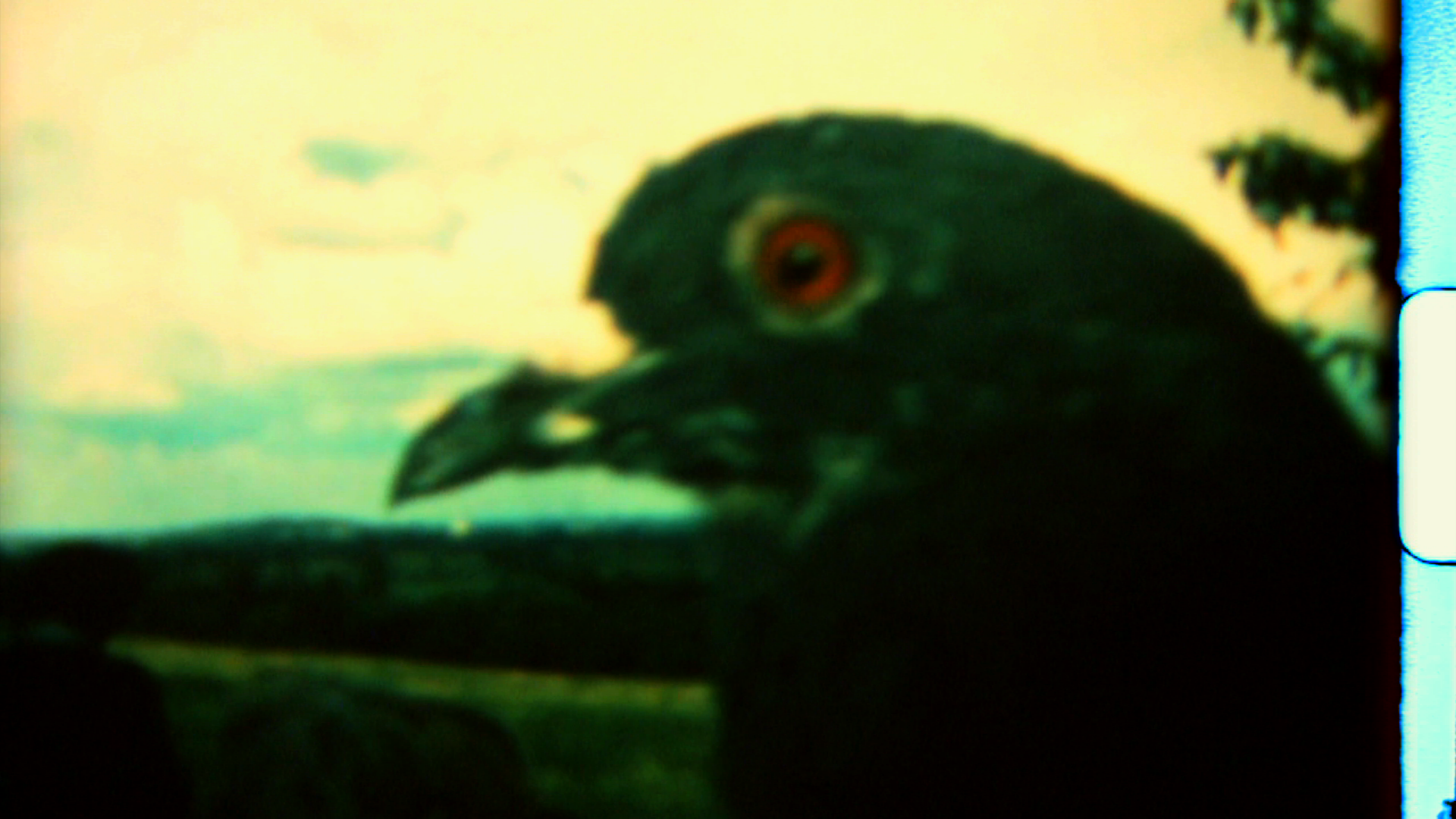 4728_birdy.png